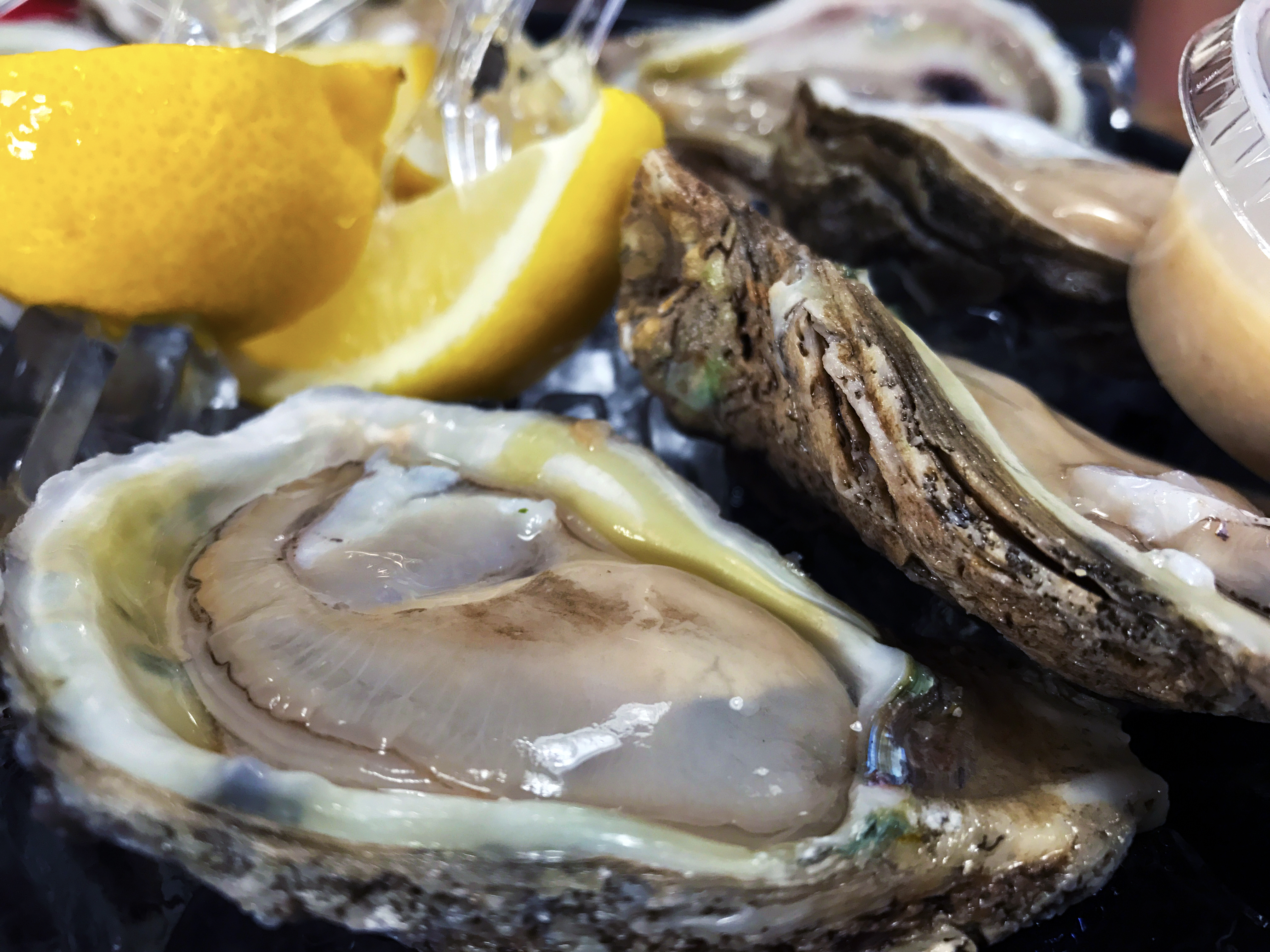 Raw Oysters from Gulf Shores Steamer//Kaitlan Foland