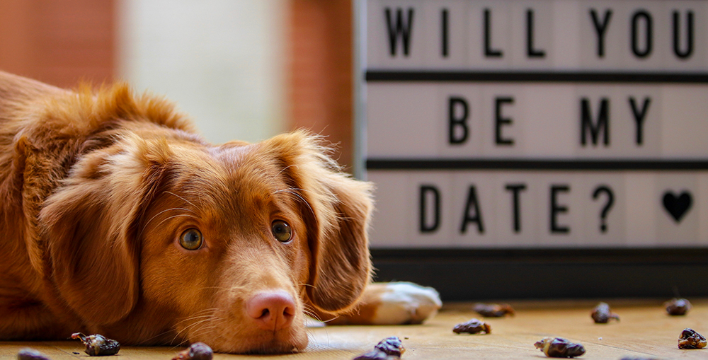 A dog lies in front of a sign that asks, will you be my Valentine?