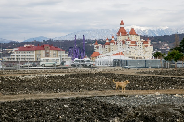 A stray dog stands in front Olympic Park as seen from the boardwalk along the Black Sea shore prior to 2014 Sochi Winter Olympic Games. Mandatory Credit: Kevin Liles-USA TODAY Sports