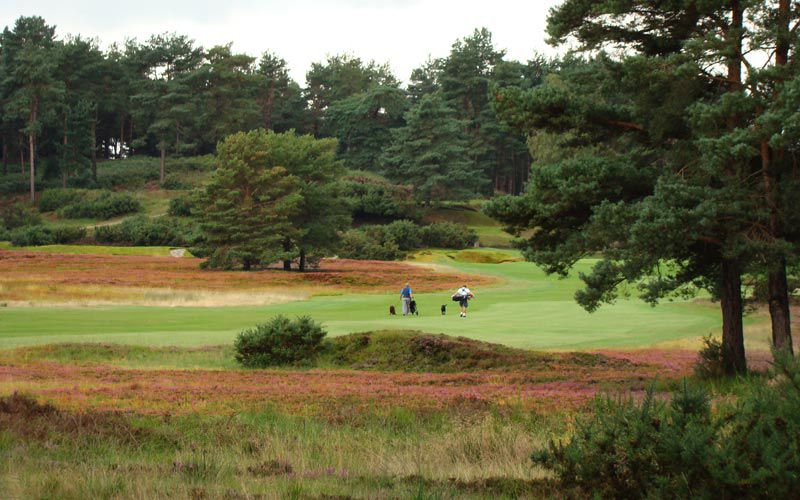 A pair of dogs and their owners make their way up the fifth fairway on the New Course at Sunningdale Golf Club in England.