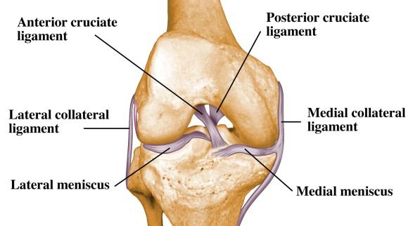 ligaments-of-the-knee.0.jpg