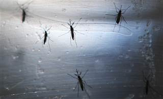 School districts in South Florida are concnerned about the spread of Zika among other risks at the start of football season (Photo: Getty Images)