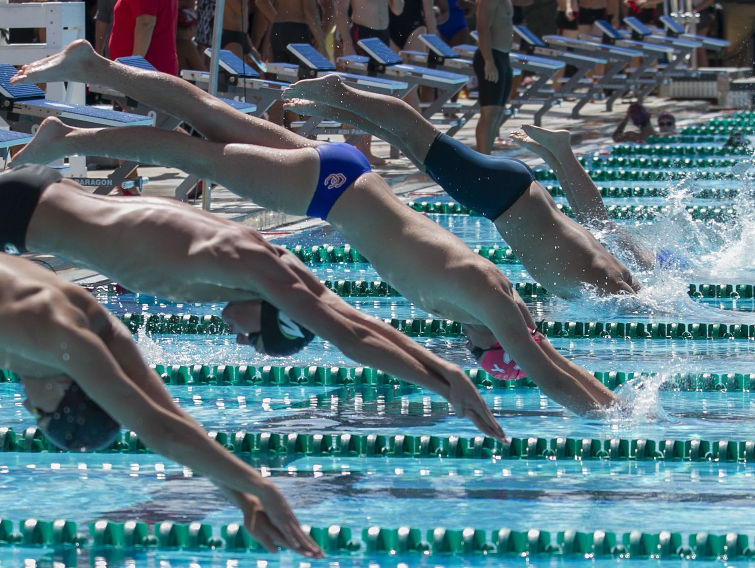 Boy swimmers jump off the blocks during one of the races Monday morning as part of the Lee County Athletic Conference swimming championships held at FGCU.